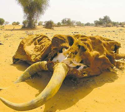 A carcass lies on the side of a dirt track in Niger.