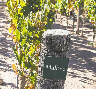 Malbec grapes.