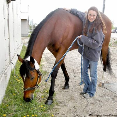 2009 Horse of the Year Rock'n USA and his trainer Tanya Lindsay call a truce in the stable area earlier this week at the Downs.