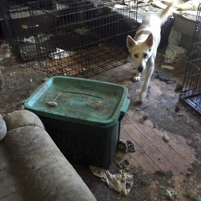 SUPPLIED PHOTO</p><p>One of more than a dozen dogs who was rescued from the Valley Gardens home.</p></p>