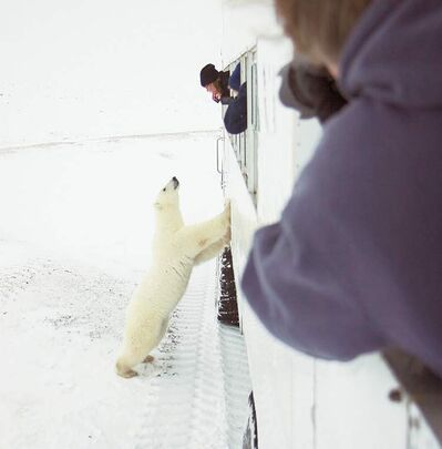 supplied photoFrontiers North Adventures, which offers tours to Churchill, has noticed an increase in bookings from Australians.