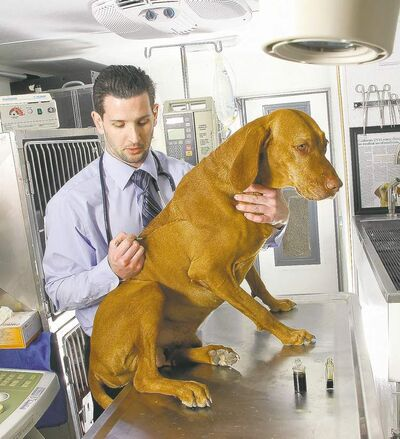 OSCAR ANAYA / VET GURU INC.Kramer applies cannabis oil to his dog Mason�s skin inside his mobile surgical truck. The dog has undergone multiple surgeries to remove cancerous growths. Below, a Los Angeles medical marijuana dispensary sells liquid weed for dogs.