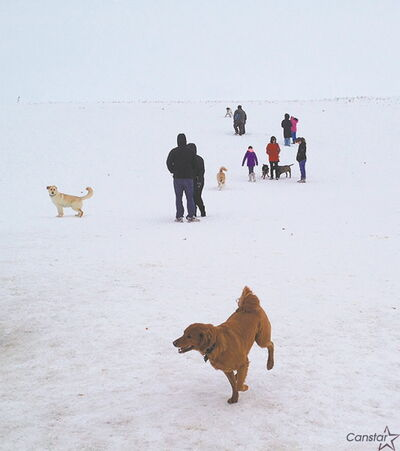 Users of the Kilcona off-leash dog park are concerned by city plans to decrease the size of the park.