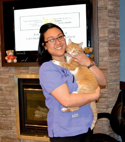 Trish Lobaton shows off Mirza, the feline mascot of the Fort Garry Veterinary Hospital.