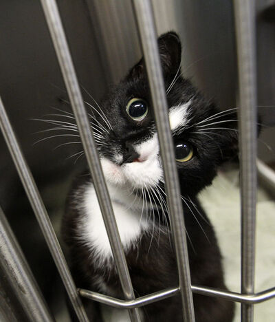 The new Surrender Conditions document states 'the WHS makes no guarantee that the animal or animals you have surrendered today will be adopted or that it/they will not be euthanized.'