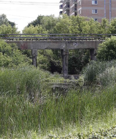 The incident occurred after some teens went to check out the creek area under the railway bridge east of Empress Street near Blue Stem Nature Park near Denson Place to take a few pictures of the graffiti on the walls.