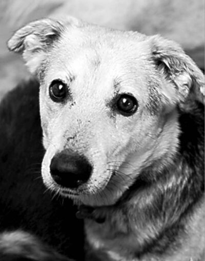 Annie (shepherd cross) -- became Catalina (still at Dogtown)
