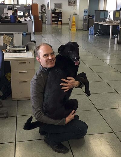 GORD SINCLAIR JR / WINNIPEG FREE PRESS</p><p>Dash the black Lab cross gets a hug from owner David Fuller in the newsroom.</p></p>