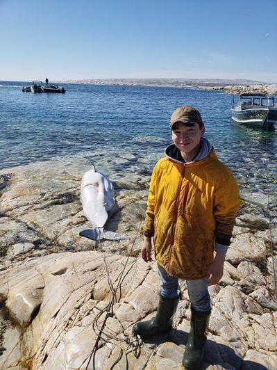 Albert Netser tweeted this picture of his 16-year-old son Nangaat standing on a rock in Rankin Inlet, Nunavut with his first harvested beluga whale on Monday in this handout photo. Netser says he didn't expect to be at the brunt of controversy. THE CANADIAN PRESS/HO-Albert Netser *MANDATORY CREDIT*