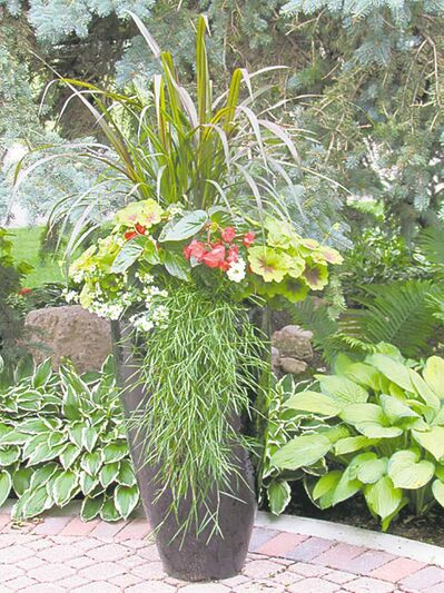 Princess Fountain Grass reaches upwards of four feet while bamboo grass cascades over the edge.
