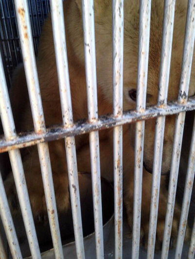 The three-year-old male bear was flown from Churchill to Winnipeg Wednesday and will spend the next 30 days in quarantine for health and safety reasons.