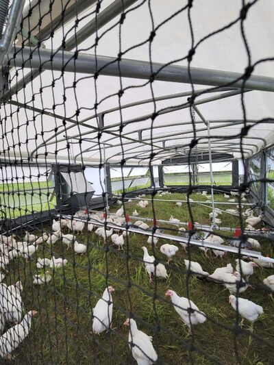 The Rova Barn's automatic movements expose chickens to fresh grass and soil. (Supplied)