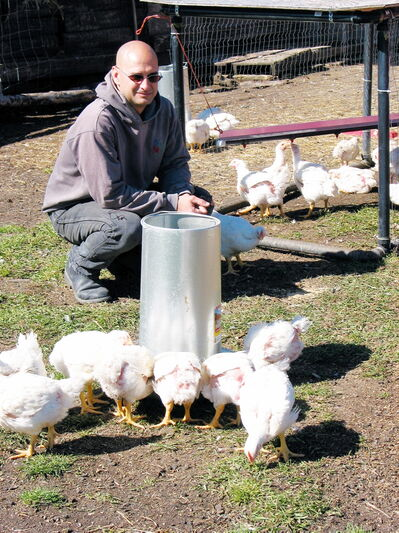 Philip Fenez scatters seed for the family's broiler chickens, turkeys and ducks on their farm near La Salle.