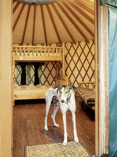 Wolseley hound Styxx Perry-Firman inside his holiday home, his castle — a yurt at Spruce Woods Provincial Park.