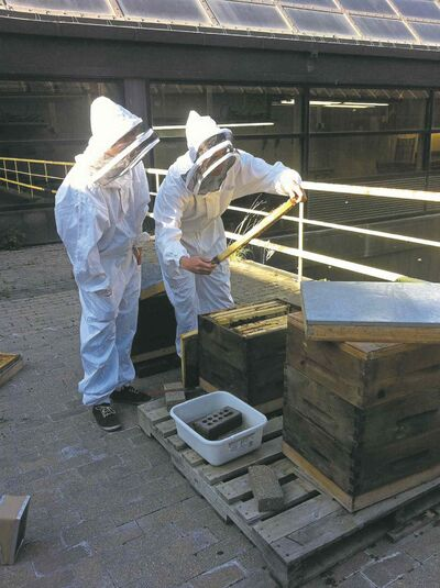 U of W beekeepers check on a hive. At right, a jar  of honey produced by the rooftop bees.
