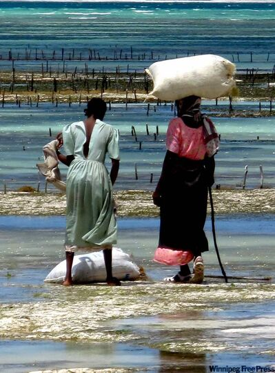 Zanzibari women collecting sea weed on the east coast of the island.
