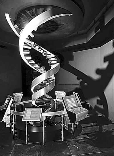 Fred R. Conrad/The New York Times Model of double helix of DNA at American Museum of Natural History.