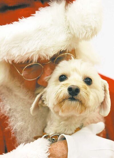 THE ASSOCIATED PRESSIs Bentley asking Santa for a dog treat maker?