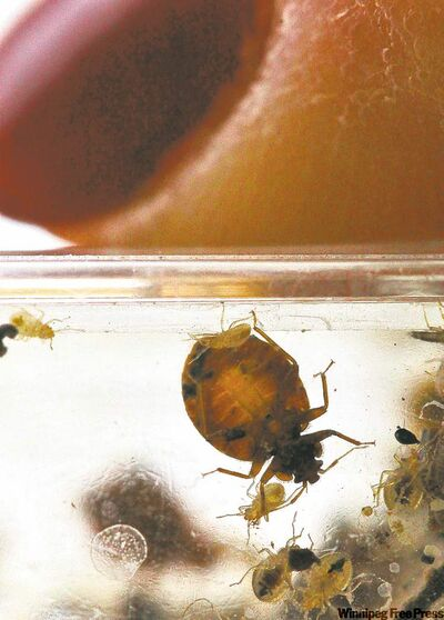 People's familiarity with bedbugs may be leading to more reports of their presence, an official says.