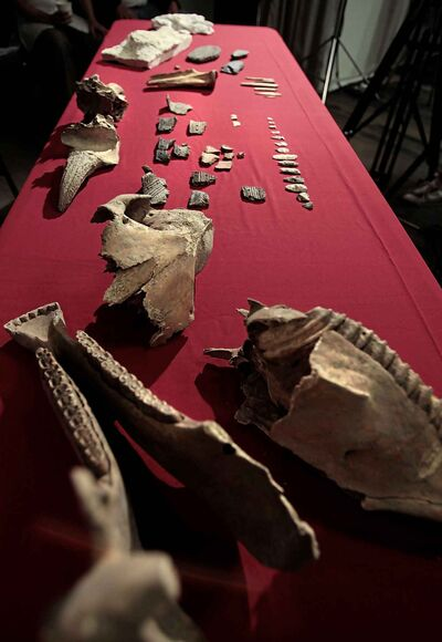 The jaw bones and skull from a horse, pieces of pottery, arrow heads and bison horns were among the items found during the archaeological excavations at the Canadian Museum for Human Rights. (Wayne Glowacki / Winnipeg Free Press files)