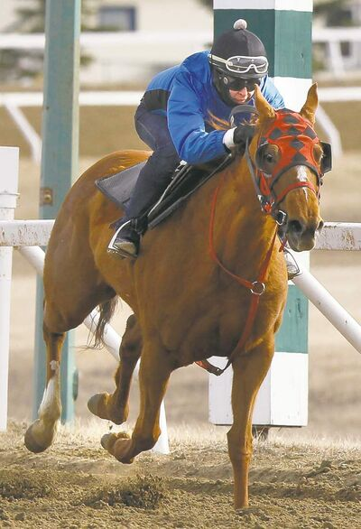 Apprentice jockey Tori Gandia, seen riding Spotlightonme last month, will race 18 times this weekend.