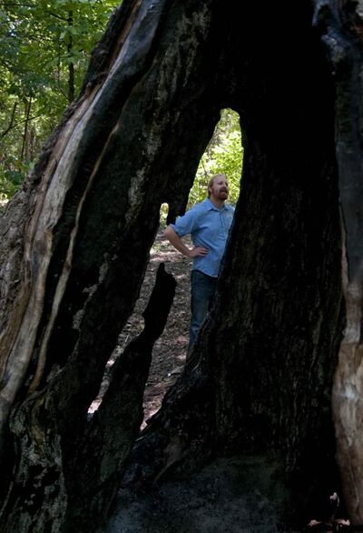 City naturalist Rodney Penner examines a cavity in a 200-year-old cottonwood tree in Mcbeth Park, used as a firepit -- which may cause the tree to collapse.