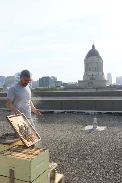 SUPPLIED</p><p>Beeproject Apiaries&rsquo; Chris Kirouac says about nine downtown buildings house hives.</p>
