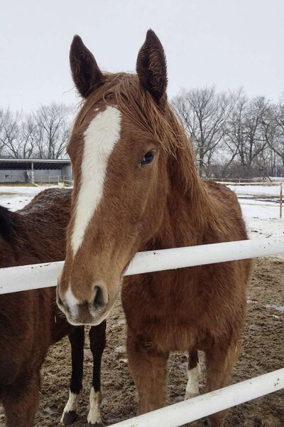 This filly needs a name. Make your suggestions by email to contests@canstarnews.com by Fri., June 16.