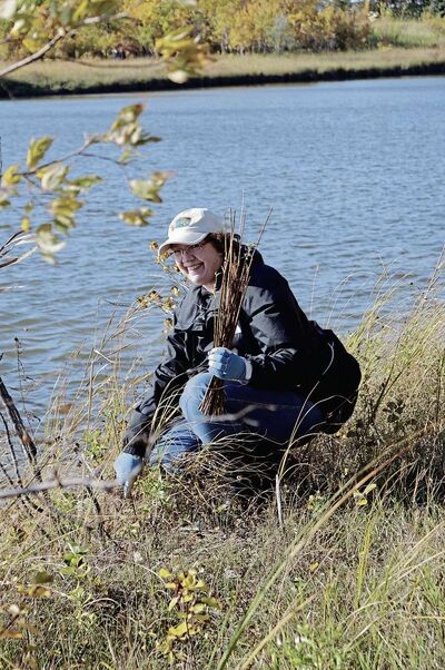 FortWhyte Alive is holding a shoreline planting event on Sat., May 5 and everyone is welcome to participate. A volunteer at a similar event held last fall is shown.