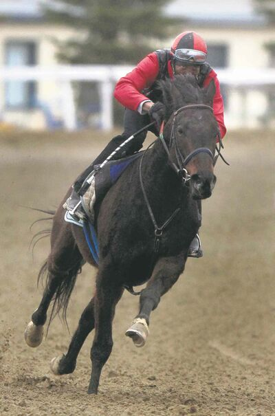 Jockey Neville Stephenson takes Get Even Girl out for a workout at Assiniboia Downs Thursday.