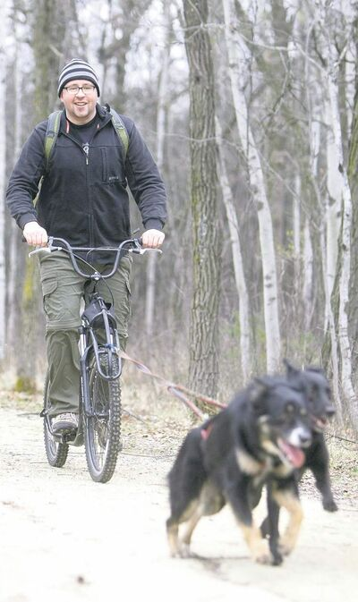 TREVOR HAGAN/WINNIPEG FREE PRESSRiver and Belle pull Kevin Roberts along trails in Assiniboine Park as part of a team sport called scootering.
