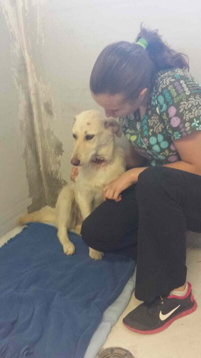 Lemon Lime, a nine-month-old Labrador puppy, was found with a slit throat and covered in hundreds of ticks.