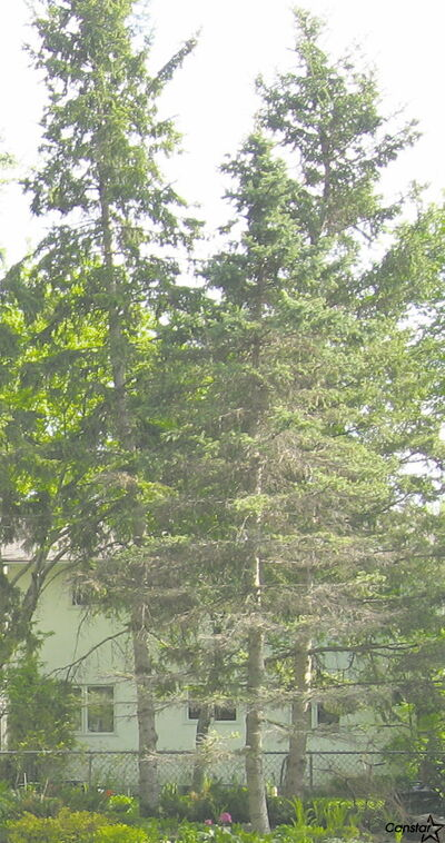 Cutting down a mature tree can be like saying good-bye to an old friend for some homeowners.