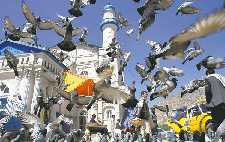 Pigeons cover the sky as Afghan men gather outside Shah-e-Dushamshera mosque in Kabul, Afghanistan, Tuesday, May 22, 2012. (AP Rahmat Gul)