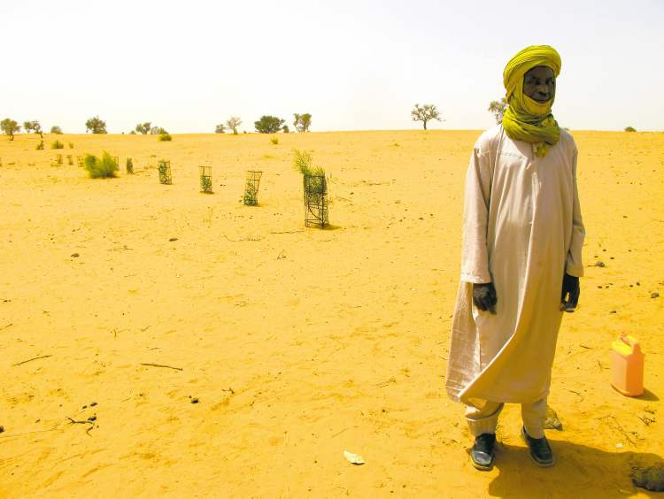 A test pilot pf drought-resistant trees outside Yatakala, Niger, at the limits of the arable land in the Sahel, a semi-arid band of Africa that sits below the Sahara Desert.