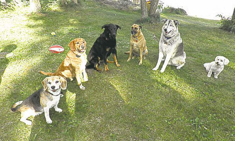 These are the six dogs in our family, at the cottage at Falcon Lake on June 30: (left to right) Jessie 11, Gary 8, Shady 11, Summer 3, Norman 10, Lucy 2. We got them to all sit for the picture by holding out treats. — Barb Melo