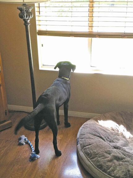 Ruby waits for her 14-year-old buddy, Tanner Larson, to get home from school.