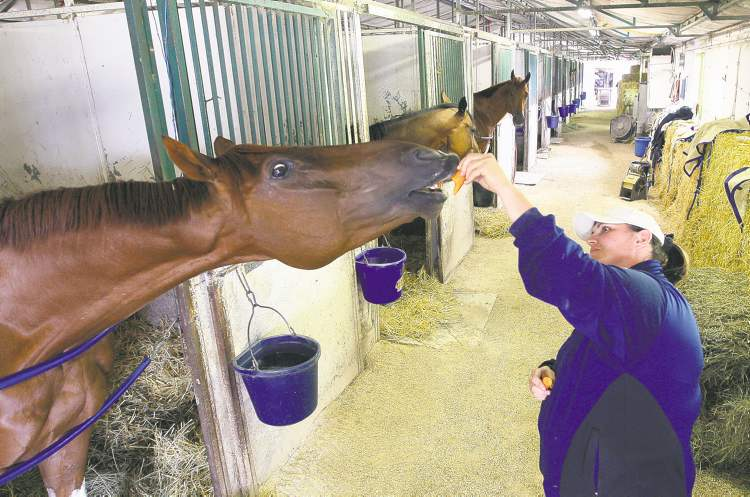 JOE BRYKSA / WINNIPEG FREE PRESSShelley Brown is in the driver�s seat to become the first woman to capture the leading trainer title at Assiniboia Downs. Here, she feeds carrots to Agassiz Stakes-winning horse Pure Glory.