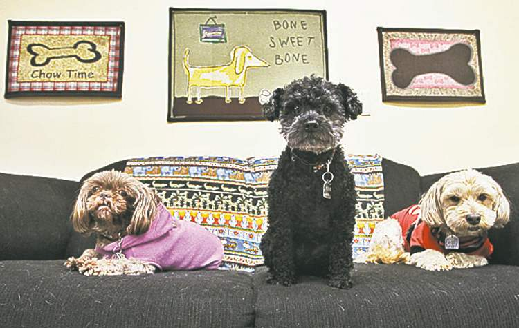 The Little Dog House, a small dog daycare and activity centre. Dogs from left: Brandie, Eddie and Bruno.