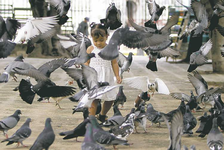 A child walks among pigeons in Plaza de Armas square in Havana.