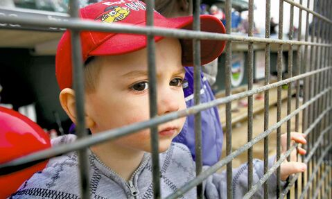 Ahston Criggar, 2, assesses the quality of players in this year's Goldeyes camp as he watches their workout from the dugout at Shaw Park Saturday.
