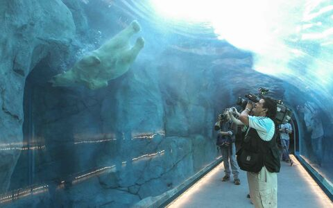 The grand opening of the Assiniboine Park Zoo exhibit Journey to Churchill was a new experience for many Winnipeggers, as well as the polar bears who were introduced to their new home only hours earlier.