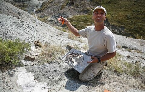 Dr. Francois Therrien, Curator of Dinosaur Palaeoecology at the Royal Tyrrell Museum, holds reconstructed model of a young Hypacrosaurus, a crested duckbilled dinosaur, while he works on uncovering a recently uncovered egg bed of the same species eroding out of a hill at Devil's Coulee near Warner, Alta., Monday, Aug. 18, 2014. THE CANADIAN PRESS/Jeff McIntosh
