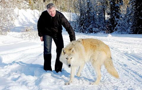 Reporter Steve MacNaull pats grey wolf Scrappy Dave.