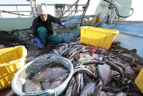 FILE - In this Aug. 26, 201 file photo, fisherman Choji Suzuki sorts out fish he caught aboard his boat Ebisu Maru in the waters off Iwaki, about 40 kilometers (25 miles) south of the tsunami-crippled Fukushima Dai-ichi nuclear power plant, Japan. Suzuki's boat is one of 14 fishing boats at his port recruited by Fukushima Prefecture to conduct once-a-week fishing expeditions in rotation to measure radiation levels of fish they catch in the waters off Fukushima. South Korea is banning all fish imports from Japan's Fukushima region because of what it calls growing public worry over radiation contamination that has reportedly prompted a sharp decline in fish consumption. The Ministry of Oceans and Fisheries said in a statement Friday, Sept. 6, 2013 that it made the move because of insufficient information from Tokyo about what will happen in the future with contaminated water leaking from the a crippled nuclear plant into the Pacific. (AP Photo/Koji Ueda, File)