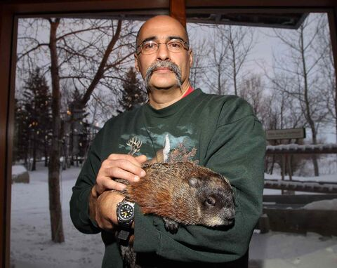 Andy Pulo, a volunteer with the Prairie Wildlife Rehabilitation Centre, is the only person Willow the groundhog allows to handle her. She didn't see her shadow Sunday morning, which traditionally means an early spring.