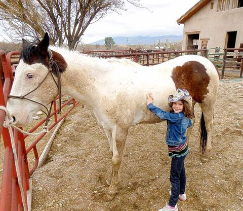 Avery grooms Judge at Tanque Verde Ranch. Photo by Lisa Kadane, Freelance) For Travel section story by Lisa Kadane.