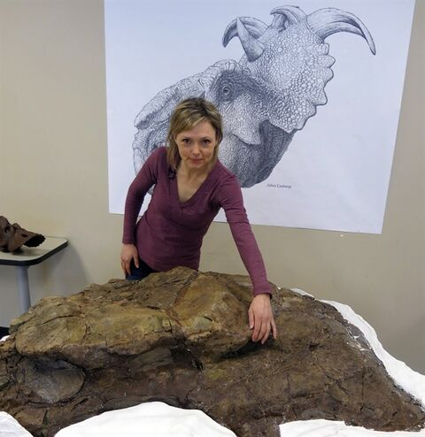 University of Calgary professor Darla Zelenitsky points to the eye socket of the skull of a pachyrhinosaur found inside the town limits in Drumheller, Alta., Thursday, Feb. 20, 2014. THE CANADIAN PRESS/Bill Graveland