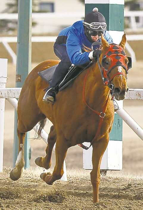 New apprentice jockey Tori Gandia, who has arrived here from Dublin, Ireland, rides Spotlightonme Monday morning at Assiniboia Downs.