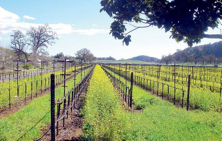 Photo courtesy of Extranomical Tours
